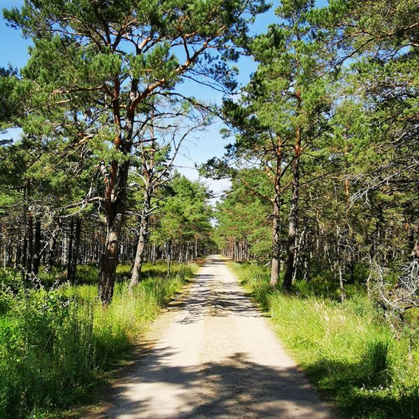 droga-przez-las-domki-momenty